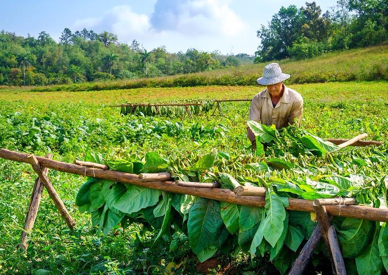 vinales-tobacco-farmer-xl.jpg
